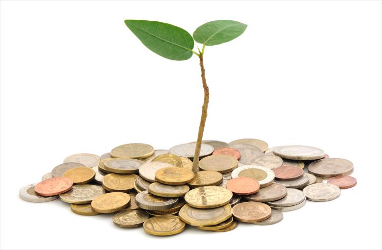 Financiamento bancário para investimento florestal