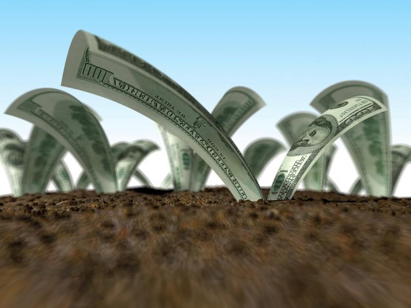 Plantio de mogno africano rende até 47 vezes mais do que o eucalipto