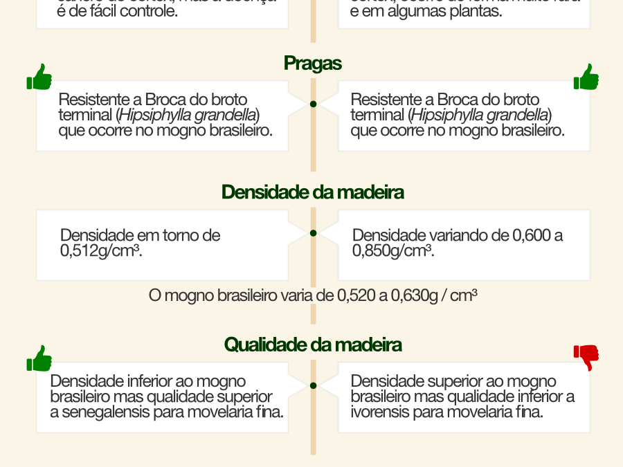 Infográfico: qual a diferença entre as espécies khaya ivorensis e khaya senegalensis?