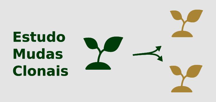 Estudo de produtividade de mudas clonais de mogno africano (khaya ivorensis)