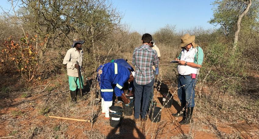 coleta amostra de solo mogno africano africa