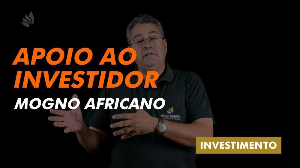 Mogno Africano: Apoio ao investidor