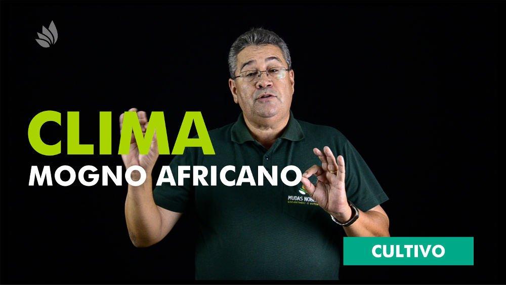 Mogno Africano: Clima