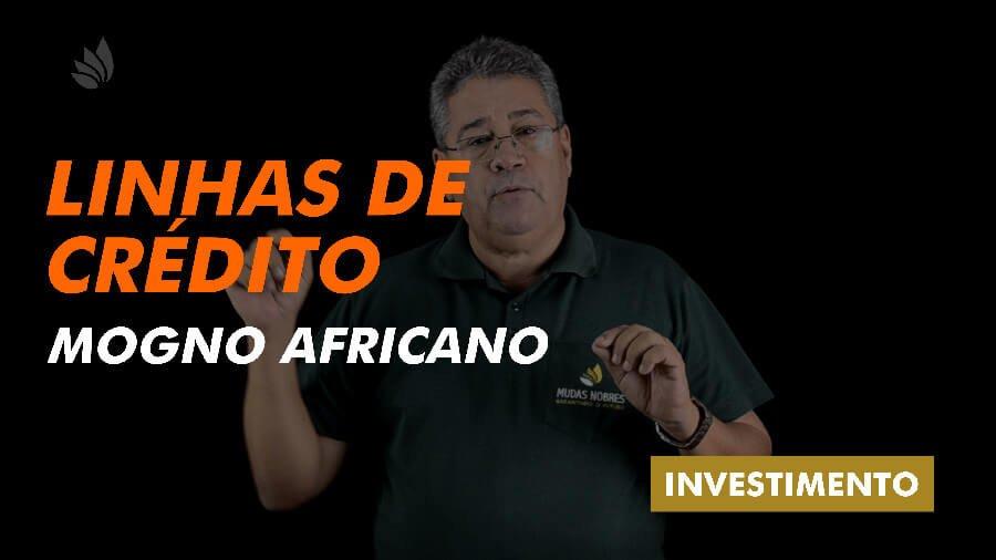 Mogno africano: linhas de crédito e custo do investimento