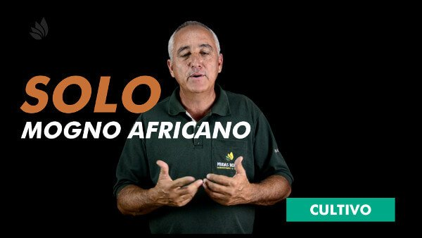 Mogno Africano: Solo e Topografia