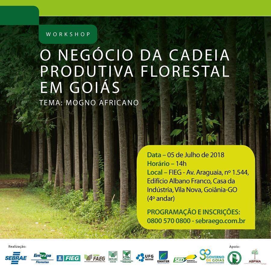 workshop cadeia produtiva florestal mogno africano