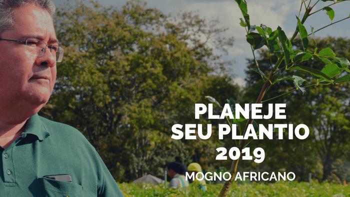 Cultivo de Mogno Africano para 2019 pode ser planejado agora