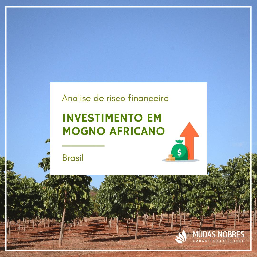 Análise financeira e de risco em plantios de Mogno Africano no Brasil