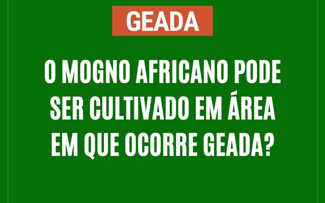 O mogno africano pode ser cultivado em área em que ocorre geada?