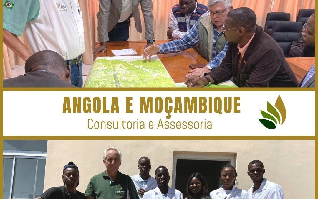 Angola e Moçambique, Consultoria e Assessoria