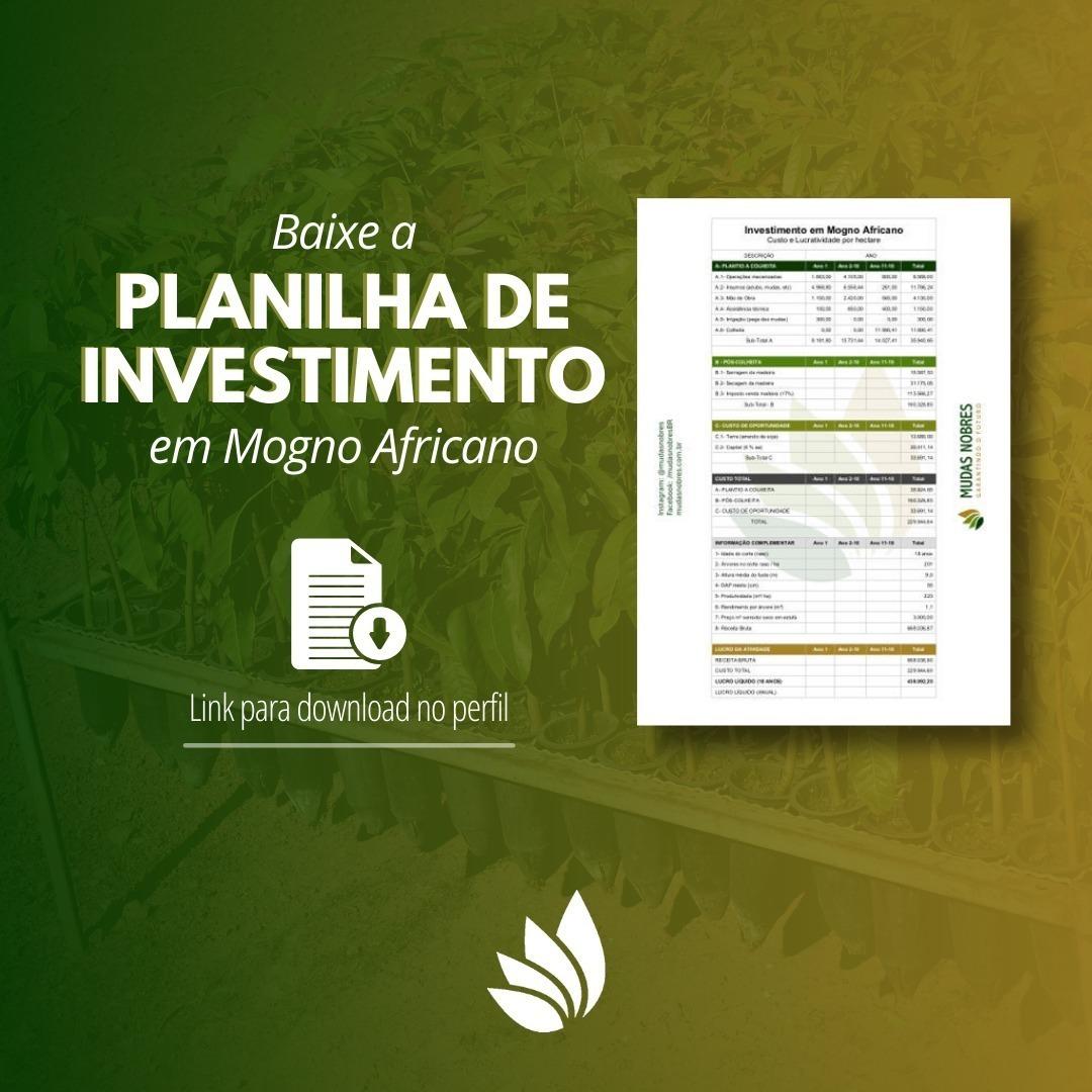 Planilha de Investimento em Mogno Africano