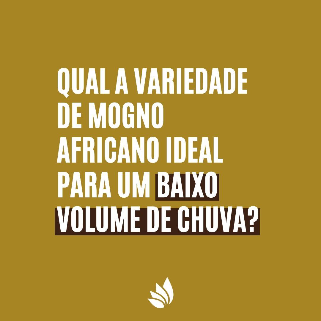 Qual a variedade de mogno africano ideal para um baixo volume de chuva?